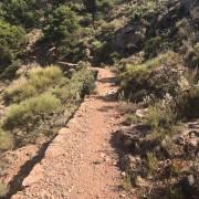 CxM Sierra de Gador Dolias (1)