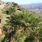 Trail Las Palomas 2017 (34)