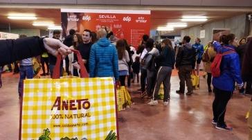 Media Maraton Sevilla 2018 (12)