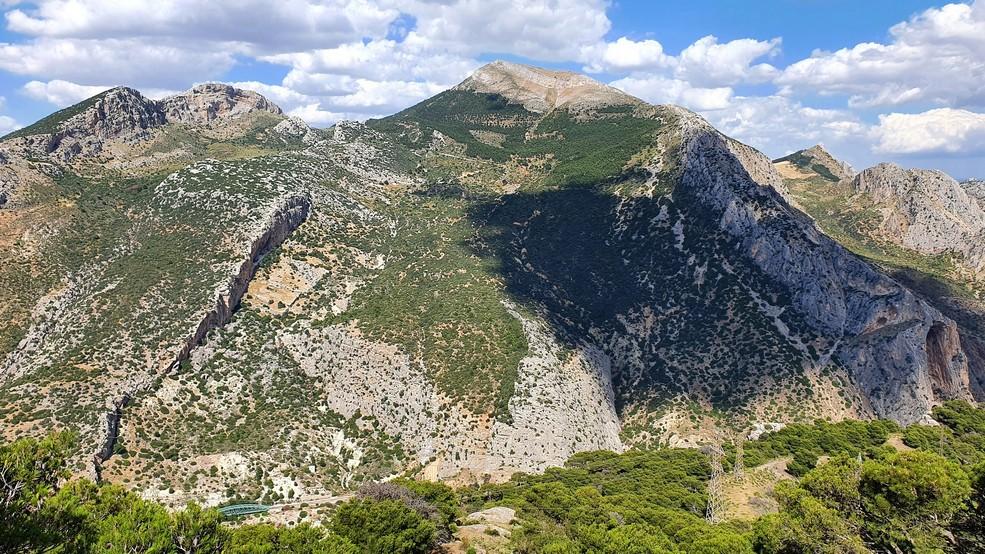 11 Cerro poblado por pinar